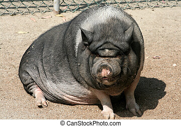 A really ugly pig soaking up some sun.