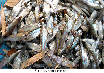 fathead minnow fish after being caught by fishermen. - ...