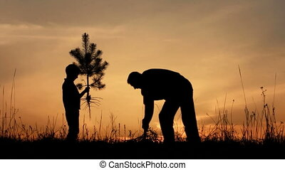 Father and son planting a tree. Sunrise. Silhouette. Spring.