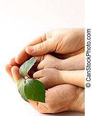 father's and baby's hands holding plant