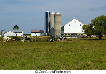 fattoria, bestiame