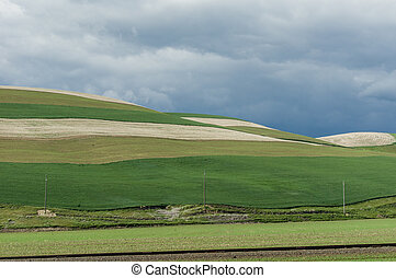fattoria, campi, arrabbiato, verde, tempesta, rimbombante