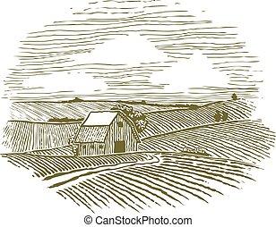 fattoria, campi, woodcut