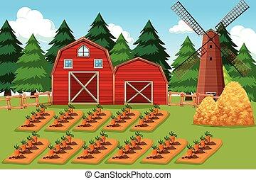 fattoria, carote, scena