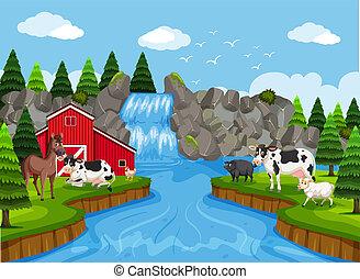 fattoria, cascata, scena