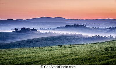 fattoria, di, oliva, boschetti, e, vigne, in, nebbioso, mattina