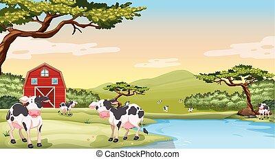 fattoria, mucche, scena