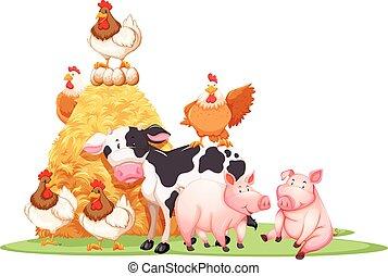 fattoria, mucchio fieno, animali