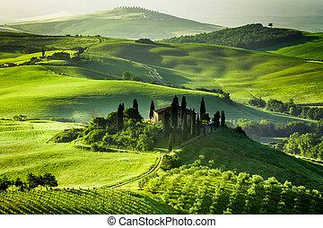 fattoria, oliva, vigne, boschetti
