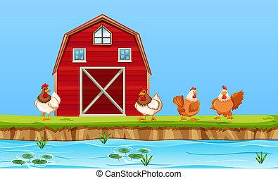 fattoria, polli, scena