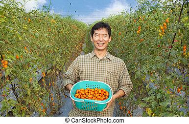 fattoria, presa a terra, pomodoro, di mezza età, felice, contadino, suo, asiatico