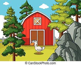 fattoria, scena, anatra, fronte, granaio rosso