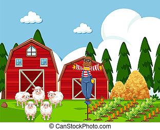 fattoria, sheep, scena