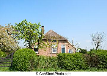 fattoria, tipico, vecchio, olandese