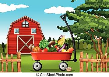fattoria, verdura
