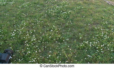 fauchage pelouse, -, défaillance, temps