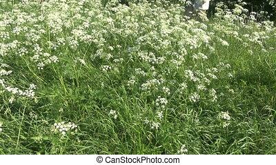 faucheur, herbe, pelouse, découpage