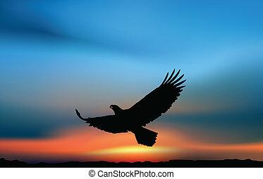 faucon, levers de soleil