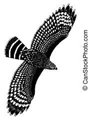 faucon, rouge-endossé