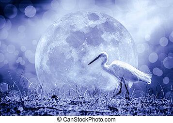fauna, animali, tone., -, egrets., scuro, outdoors., bianco