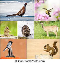 fauna, collage.