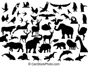 Fauna - Contour images of fauna on the planet Earth