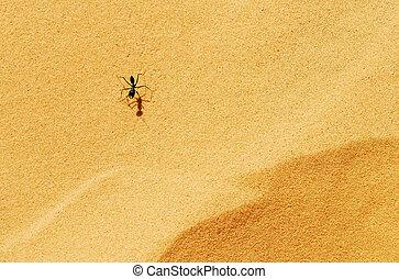 fauna, fotografias, -, formigas
