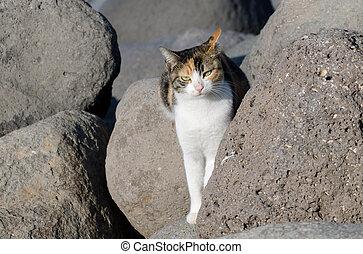 fauna, fotografias, -, gatos
