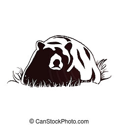 fauna, oso
