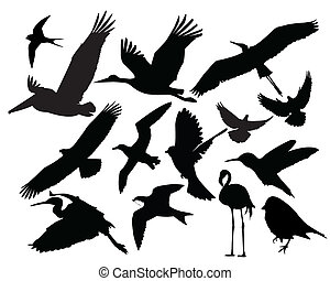 fauna, pájaro