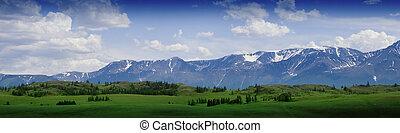 fauna, paesaggio, prato, natura, altay, montagne