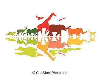 fauna, safari
