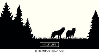 fauna, silhouette, prato, due, foresta nera, lupi bianchi