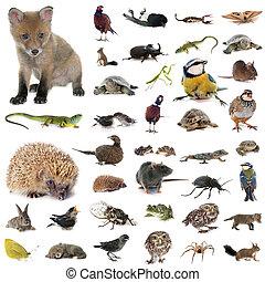 fauna, studio, europeaan
