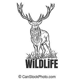 fauna, texto, dibujado, mano, venado, aislado, backgrounds...