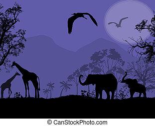 fauna, tramonto, africano
