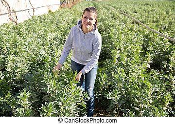 fava bonen, positief, controleren, vrouw, seedlings