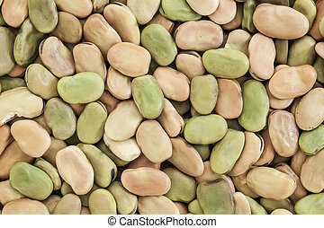 fava (broad) bean - background and texture of dried fava...