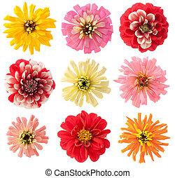 Favourite summer european garden flowers set isolated