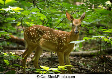 Fawn and Doe Eating lunch