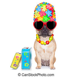 fawn french bulldog dog ready for summer vacation or ...