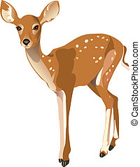 Fawn, vector illustration on isolated background