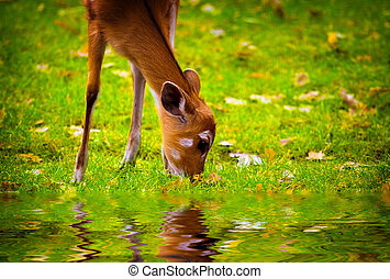 Fawn in the nature