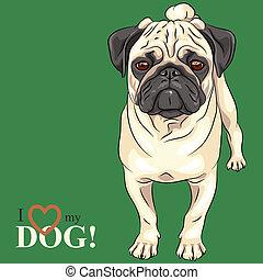 fawn, schets, pug, ras, dog, vector, serieuze
