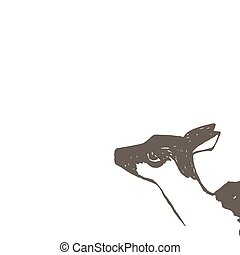 Fawn. Vector illustration. Isolated on white background.