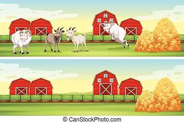 fazenda, cabras, cena, celeiros