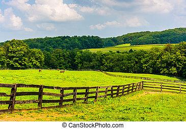 fazenda, campos, e, colinas rolantes, em, rural, york,...