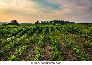 fazenda, campos, em, pôr do sol, em, rural, york, município, pennsylvania.