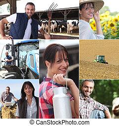 fazenda, colagem, vida