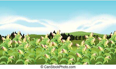 fazenda, landscapr, milho